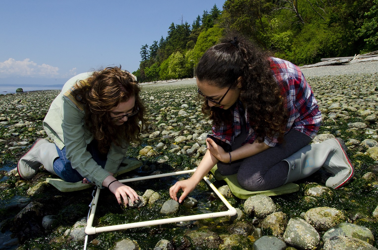 High school students studying beach ecology
