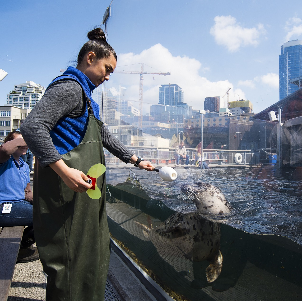 Seattle Aquarium employee performing enrichment activities with harbor seal