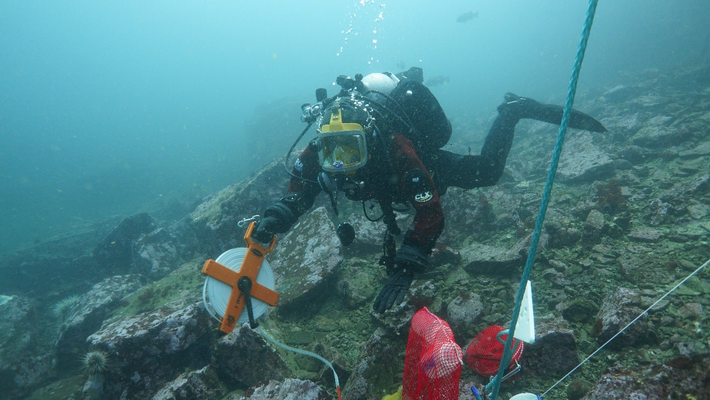 A diver setting up a survey.