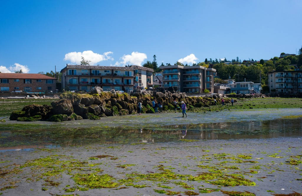 Know your beach-this week from the beach | Seattle Aquarium