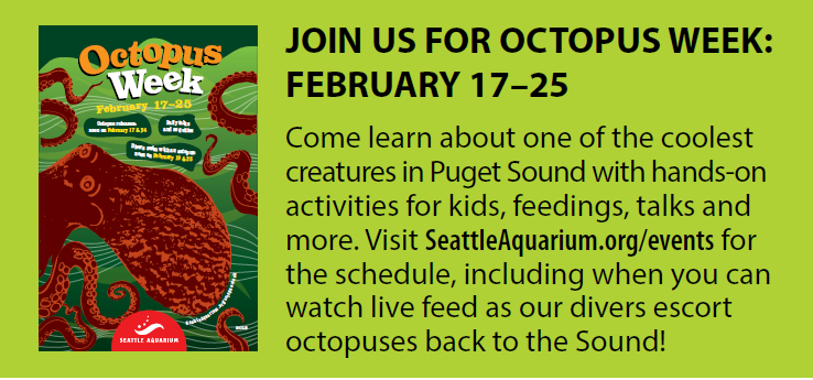 How many octopuses are in Puget Sound?