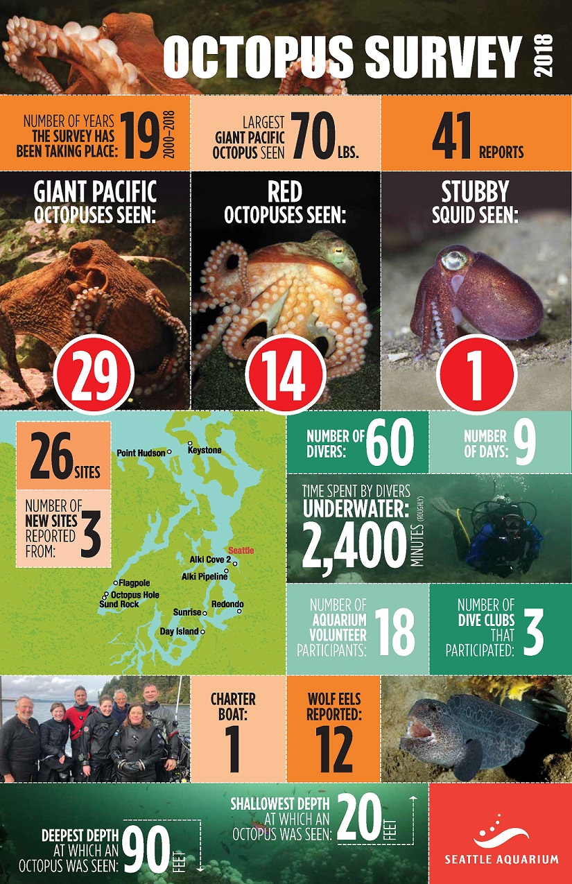 Octopus Survey 2018 results infograph