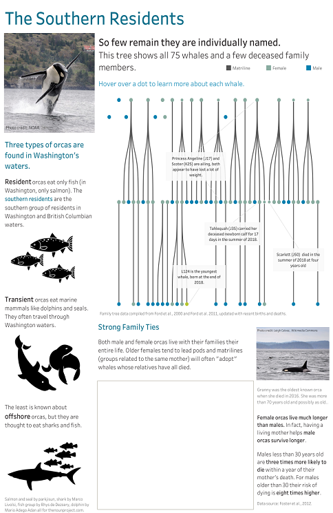 Southern Resident Orcas infograph