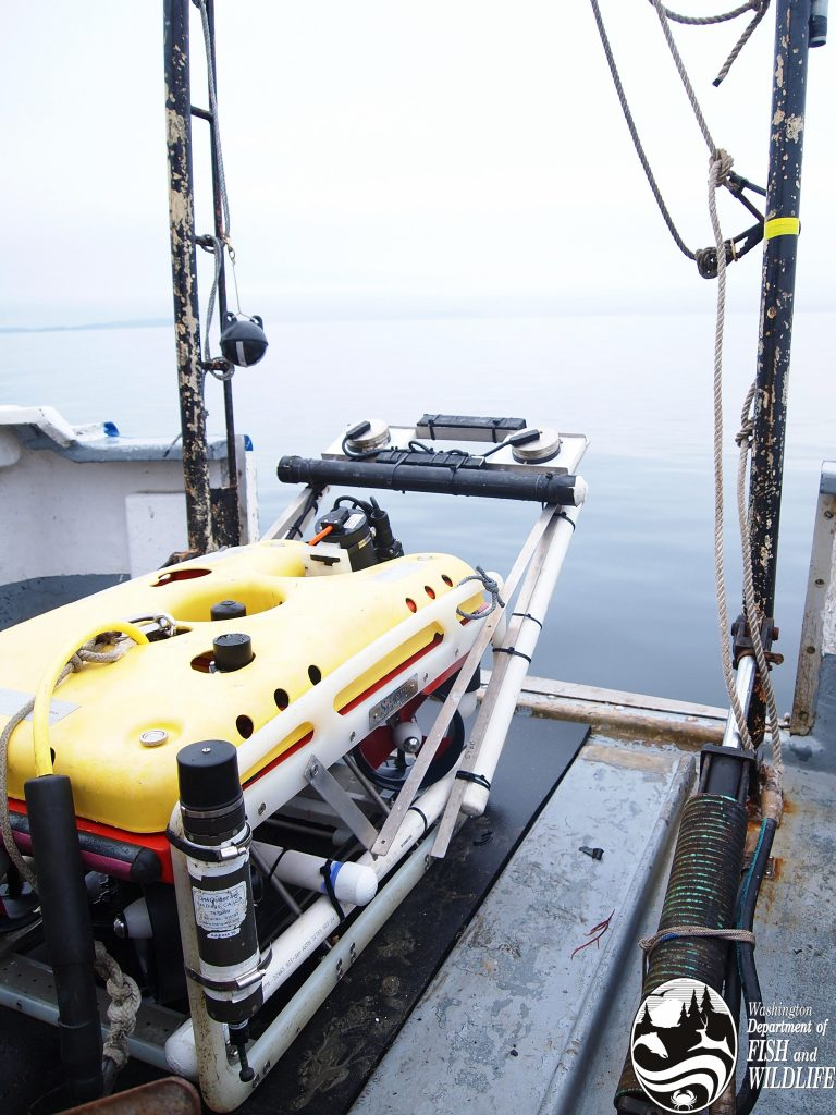 Remotely operated vehicle for exploring underwater habitat and fish species in Puget Sound.