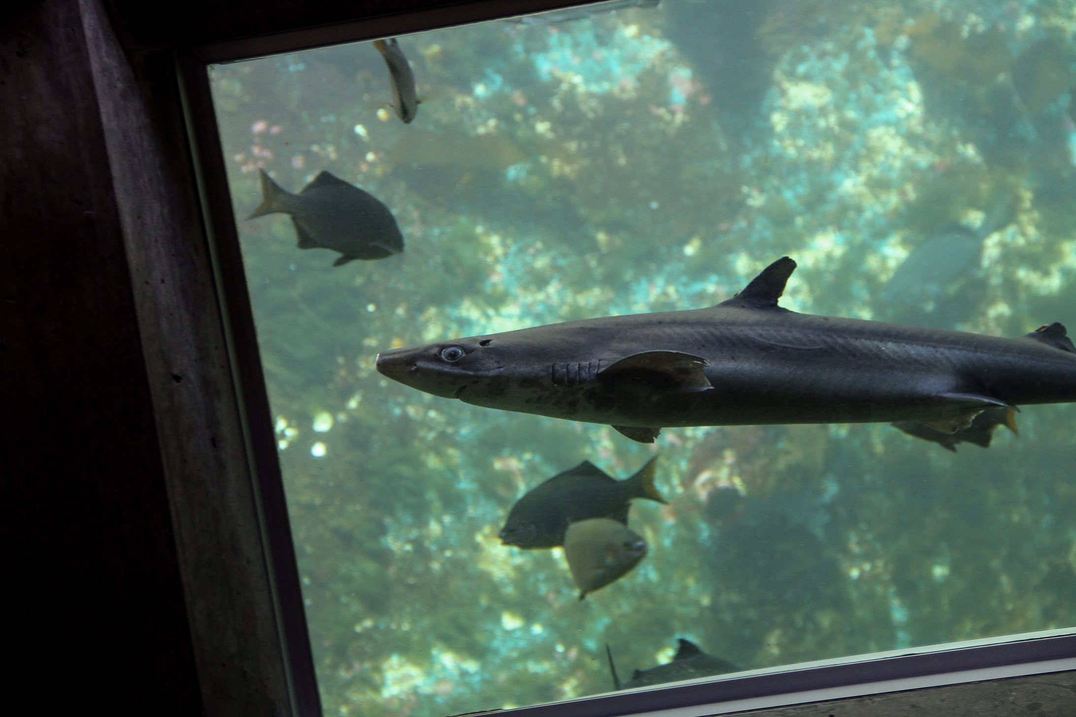 Dogfish in underwater dome