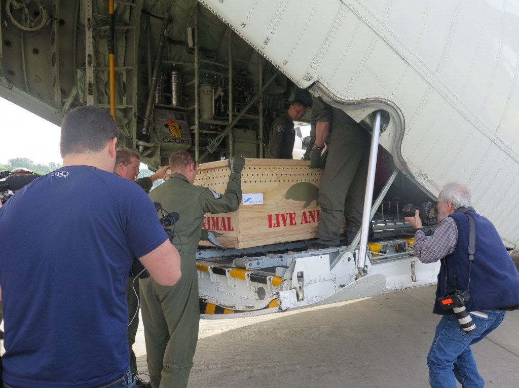 Tucker being unloaded from the C-130 Hercules.