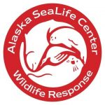 Seattle Aquarium staff assist with sea otter rehabilitation in Alaska