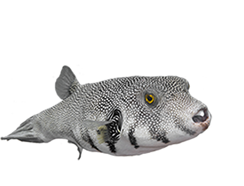 Pufferfish