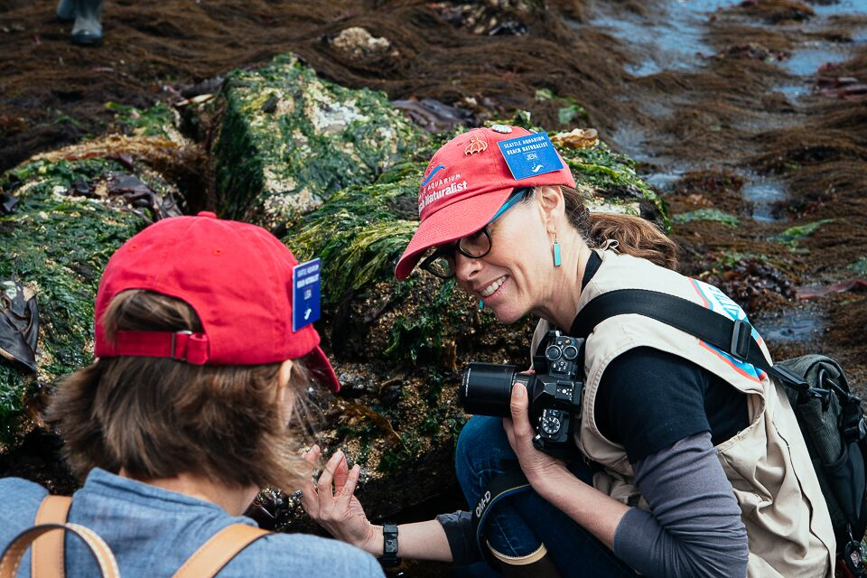 "#2 in the 2018 series of guest blog posts by Seattle Aquarium beach naturalists Bobby Arispe and Jen Strongin.  Message from Bobby:  The 2018 group of Seattle Aquarium Beach Naturalists have been hard at work training for the new season. We have lots of new volunteers and plenty of returning volunteers—who you can spot by their faded red hats. I am starting my third season and I am still learning so much every time I go out on the beach. The veterans really help to train the eyes of the newer naturalists. So much of what we are looking for while we are on the beach is for smallest of indicators of a creature. It could be a color that stands out against the rocks and algae. It could be a quick movement that catches the light. We learn to look for the habitats of the creatures. I am still amazed when a fellow naturalist finds the tiniest of creatures—something I would have looked right past.My fellow blogger and photographer Jen works with a new beach naturalist to help identify a creature.  As I am regaining my ""sea-legs"" for the season lets take a look at some of the critters we found on our final low-tide training walks at South Alki and Golden Gardens beaches.I love to photograph anemone, especially when they are still in the water. This painted anemone was tucked under a rock and had all of its tentacles out in the water.A large male Red Rock Crab holds a female close, waiting for her to molt, in order to mate.A sea lemon is hidden between the rocks. They are a type of nudibranch that likes to feed on encrusting sponges.Pacific gaper siphon. This one blasted my camera lens with water as it retreated underground.A Moonsnail burrows itself back into the sand.A tiny Acorn Barnacle holds on to the back of a colorful Lined Chiton.Jen found a disoriented Dock (Coonstripe) Shrimp in the Sargassum.A small Stiff-Footed Sea Cucumber (aka, White Sea Cucumber) pokes out from under a rock.  A couple photos of an Orange Sea Cucumber with it's oral tentacles out and a close up on the body with the tentacles pulled in.  I am"