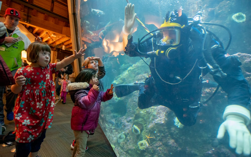 Children interacting with a Seattle Aquarium diver who is underwater in the Window on Washington Waters habitat.