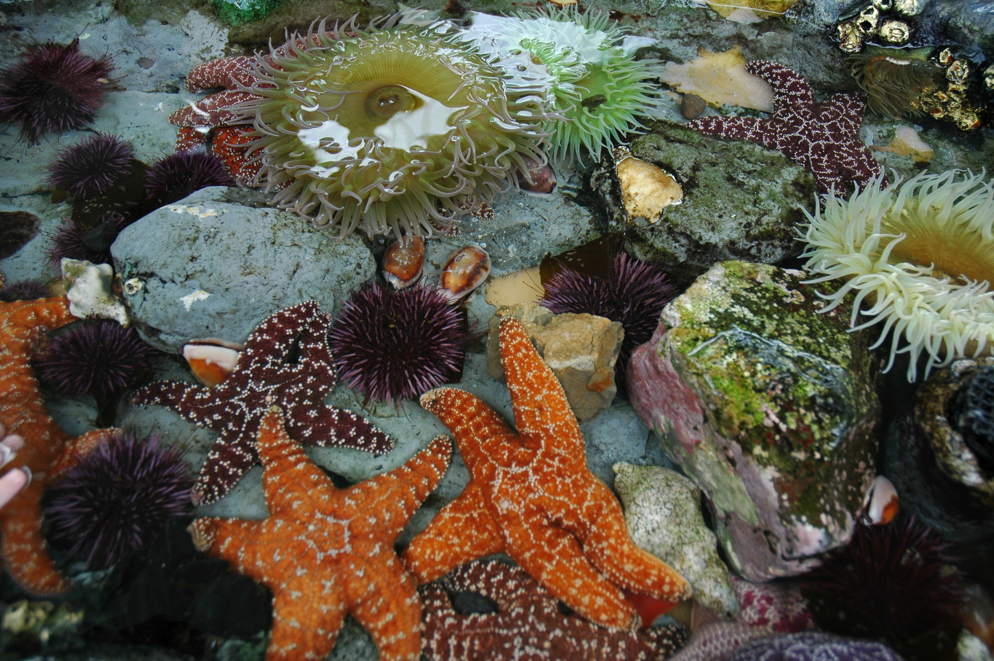 Tidepool animals