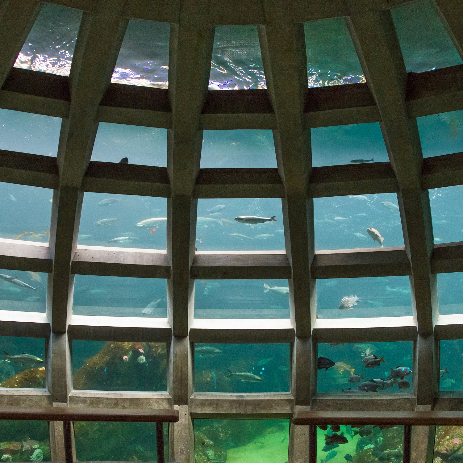 Underwater dome exhibit