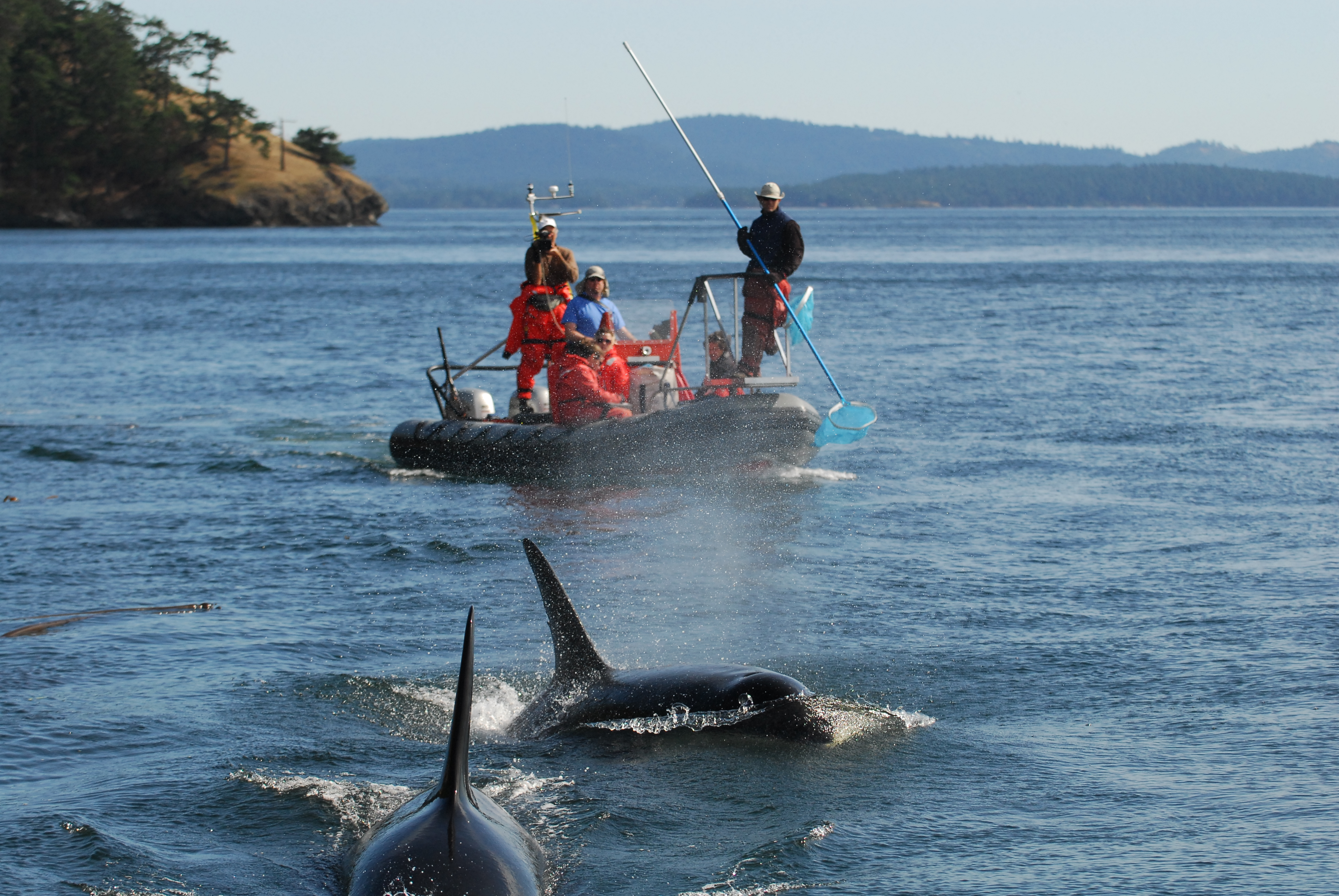 NOAA research boat in action, photo courtesy of Center for Whale Research