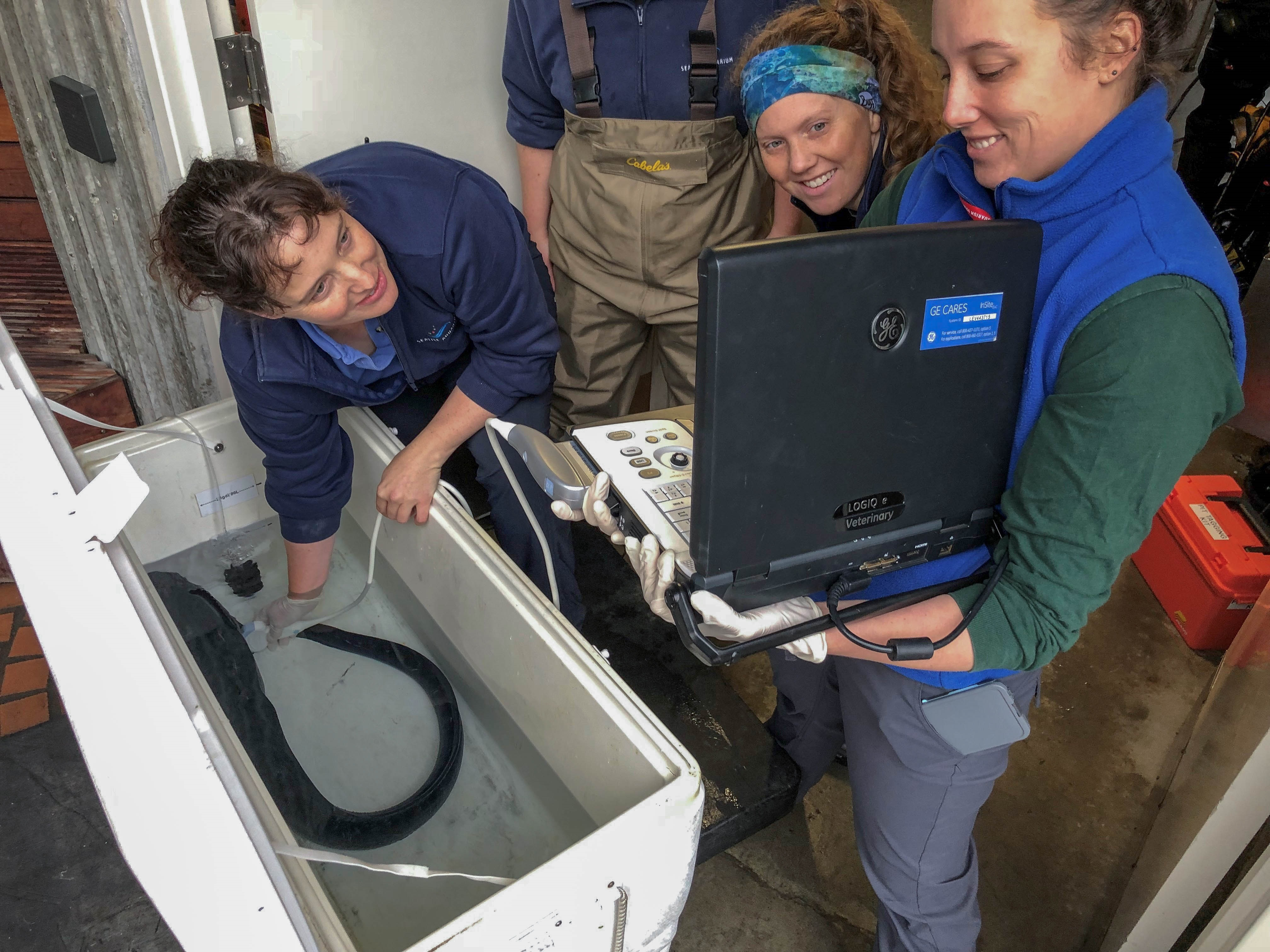 Veterinarians laughing around the wolf eel in cooler