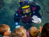 Diver high-fiving children