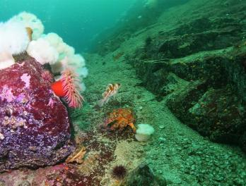 Rocky seabed with different fish and invertebrates