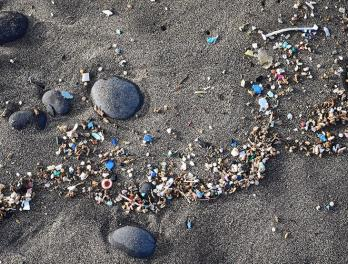 Plastic pollution on a sandy beach.