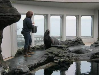 Traci Belting with fur seal Commander