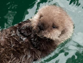 http://blog.seattleaquarium.org/conservation/pup-naming-contest-now-open/attachment/aniaks-pup-31-jan-b-009/