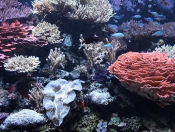 Winter Fishtival: Coral Reef Fun Facts