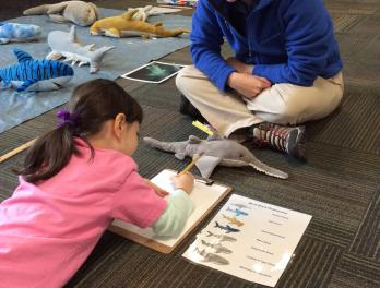 Gills Club: girls getting smart about sharks