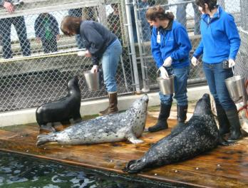Winter Fishtival: Marine Mammal Fun Facts