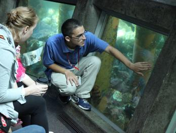 What's the best thing about volunteering at the Seattle Aquarium?