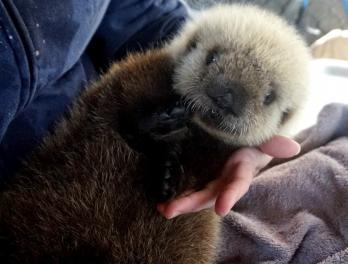 A fond farewell to sea otter pup Rialto