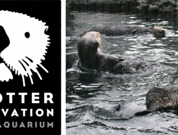 Seattle Aquarium Sea Otter Conservation Program
