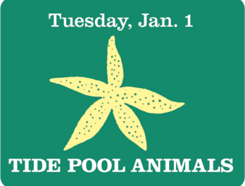 Tide Pool Animals