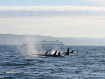 http://blog.seattleaquarium.org/conservation/noaa-orca-research-finally-the-waiting-pays-off/attachment/dorsalfinswithferry/