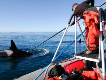 NOAA Orca Research: Still Waiting For Whales