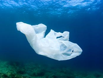 Plastics in our ocean