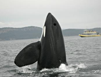 NOAA Orca Research: Waiting For Whales