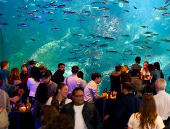 Valentine S Day At The Aquarium Seattle Aquarium