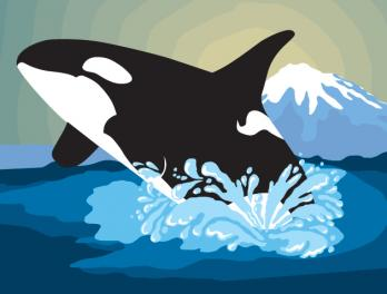Orca Awareness Celebration at the Seattle Aquarium